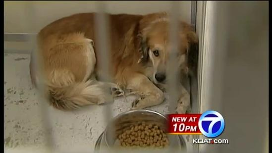 Pups euthanized because of court backlog