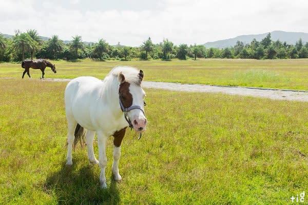 洄瀾灣開心農場佔地廣大,除了有種植向日葵花海外,更有大片草坪與眾多動物可以觀賞與互動。
