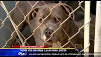 Thieves steal dogs from El Cajon animal shelter
