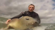 Wild Seal Joins Surfers
