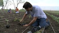 Urban Farm Gives Harvest to Food Pantry