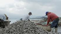 Raw: Thousands of Fish Dead in Mexico Lake