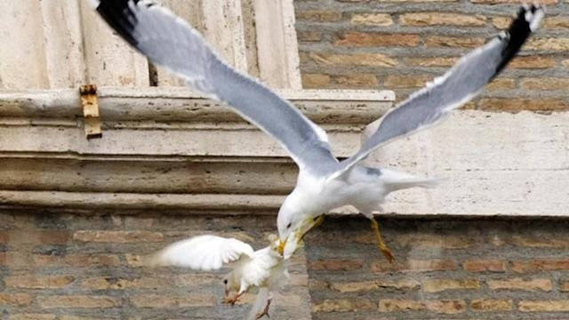 Pope's dove attacked by seagull during Angelus prayer