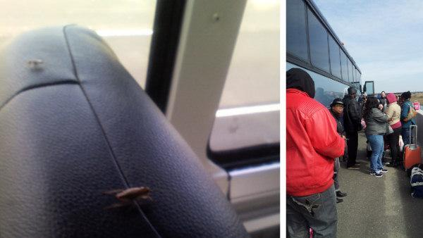 Greyhound bus from Atlantic City stops because of roaches (PHOTOS)