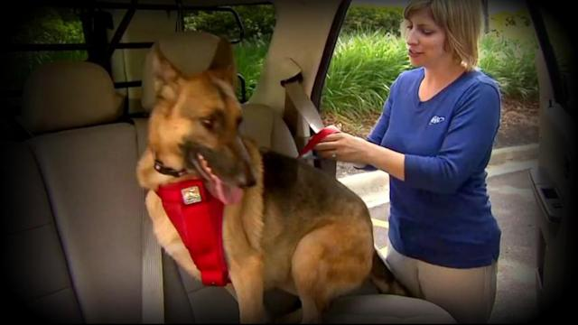 Car Harnesses for Pets: Are They Safe?