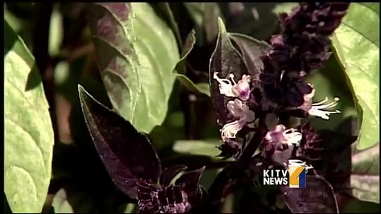 Local farmers want more community gardens