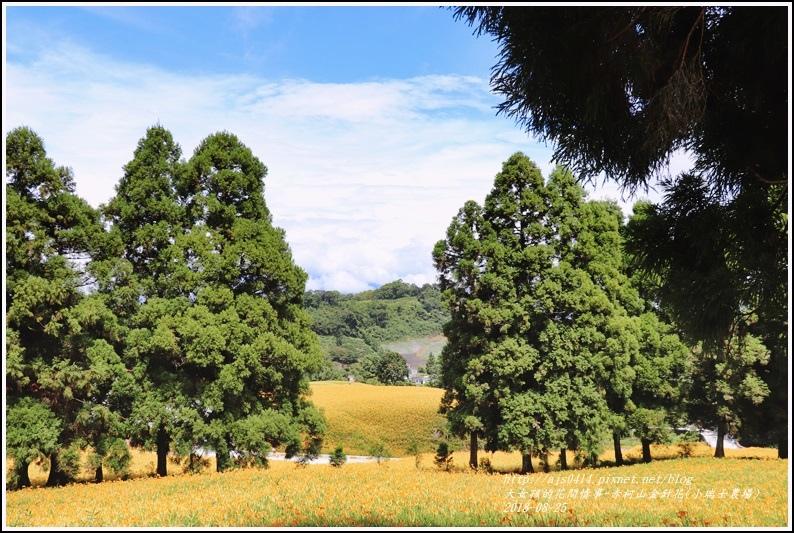 赤柯山金針花(小瑞士農場)-2018-08-04.jpg