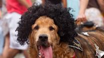 Raw: Carnival Party for Dog Lovers in Rio