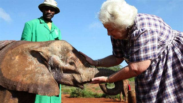 Saving baby elephants in Kenya