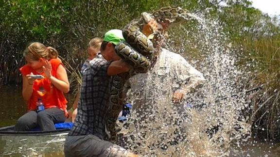 Tour Guide Wrestles 10-Foot Snake In Everglades