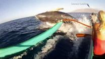Whale gives 'love tap' to canoe off Maui