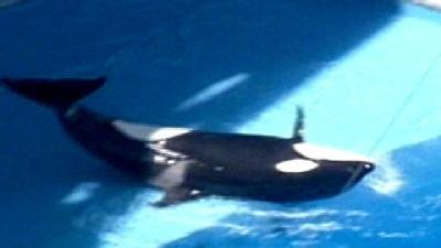 SeaWorld Attacks Family's Emotional Trauma Claims