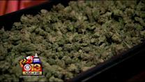 Supporters Square Off With Law Enforcement On Marijuana Legality