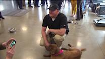 Emotional Reunion For Veteran and His Military Dog
