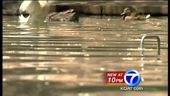 UNM curbs duck population by destroying eggs