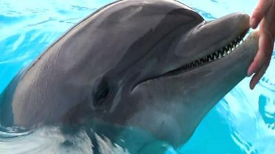 Official: 'Strange Spike' in Baby Dolphin Deaths