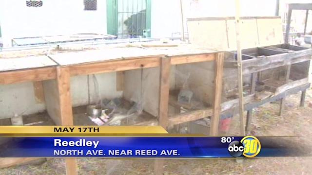 Animals donated to Reedley High School