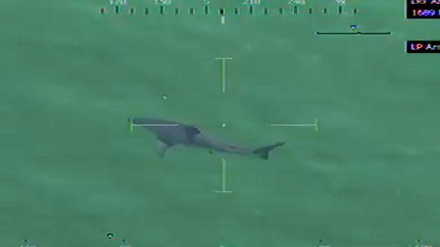 Large great white shark spotted off Massachusetts beach