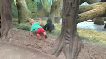 Toddler playing with Gorilla Toddler at the Columbus Zoo!