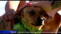 Chihuahua reunited with family 2 years after kidnapping