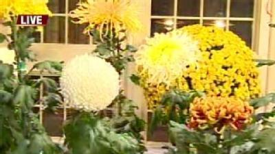 Mum's The Word: Ava Visits Conservatory Exhibit