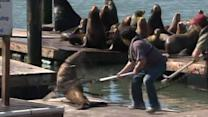 Rescuers save sea lion tangled in debris