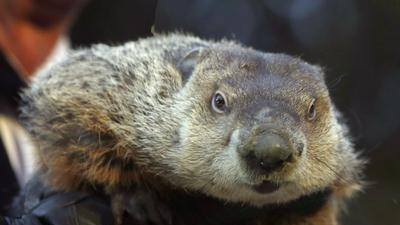 Raw: Punxsutawney Phil Predicts Early Spring