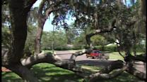 Carrollwood Village iconic tree falls from tropical storm