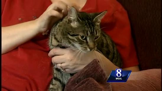 Family thanks cat for saving their lives