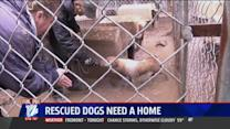 More Than 160 Puppy Mill Dogs Looking For New Home