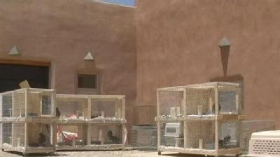 Cockfighting Charges Dropped In Santa Fe