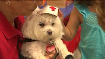 Therapy Dogs Welcome Powerhouse Fire Evacuees
