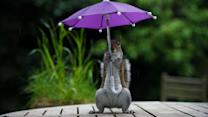 Photographer Convinces Squirrels to Pose in Humorous Scenes