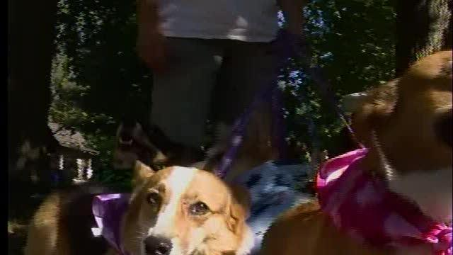 Paws in the Park event success in Bartlesville