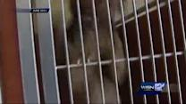 Dogs locked up as evidence may get released