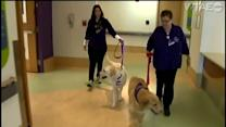 Healing Pets at Children's Hospital Pittsburgh Making a Difference