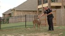 Deer Rescued After Found Tied Up at Construction
