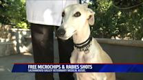 Vet Group Aims for Microchipping World Record