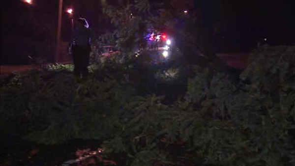 Storm knocks over large tree in Roxborough