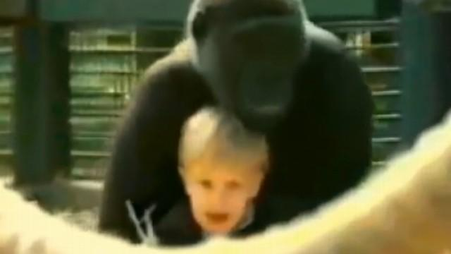 Toddler Playing With Gorilla Video Goes Viral