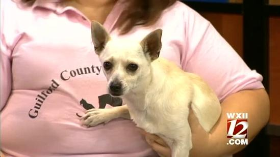 Noon Pet of The Week: Guero