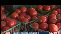 Tomato Farmers Hopeful of Trade Agreement Lift