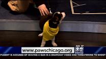 PAWS Pet Of The Week: Benay