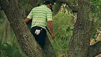 Swinging From Branches: Golf Style