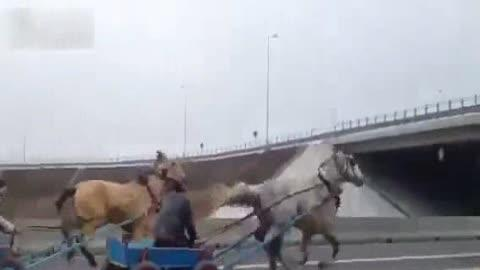 Horse and Cart Race Down Highway
