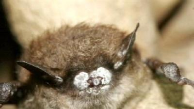 Wildlife Experts Concerned About State Bat Population