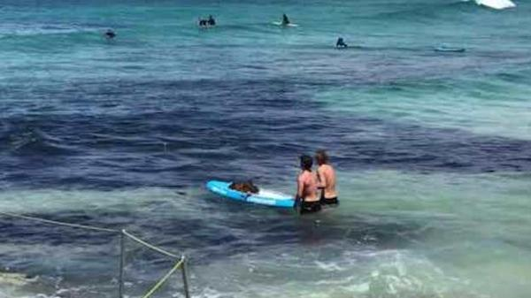 Bondi Rescue lifeguard Harries leads Bronte rescue of eight Hillsong