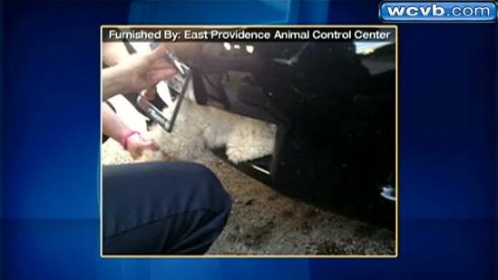 Pooch takes 11-mile ride wedged in car's grill