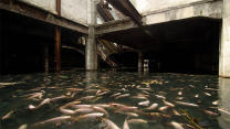Abandoned Mall Filled With Thousands of Fish