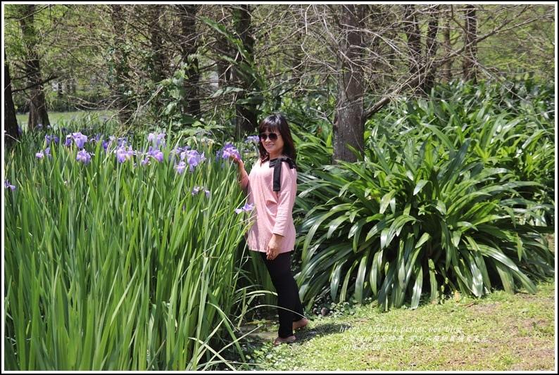 雲山水植物農場鳶尾花-2018-04-32.jpg